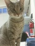 Kitty Kyle  Haro