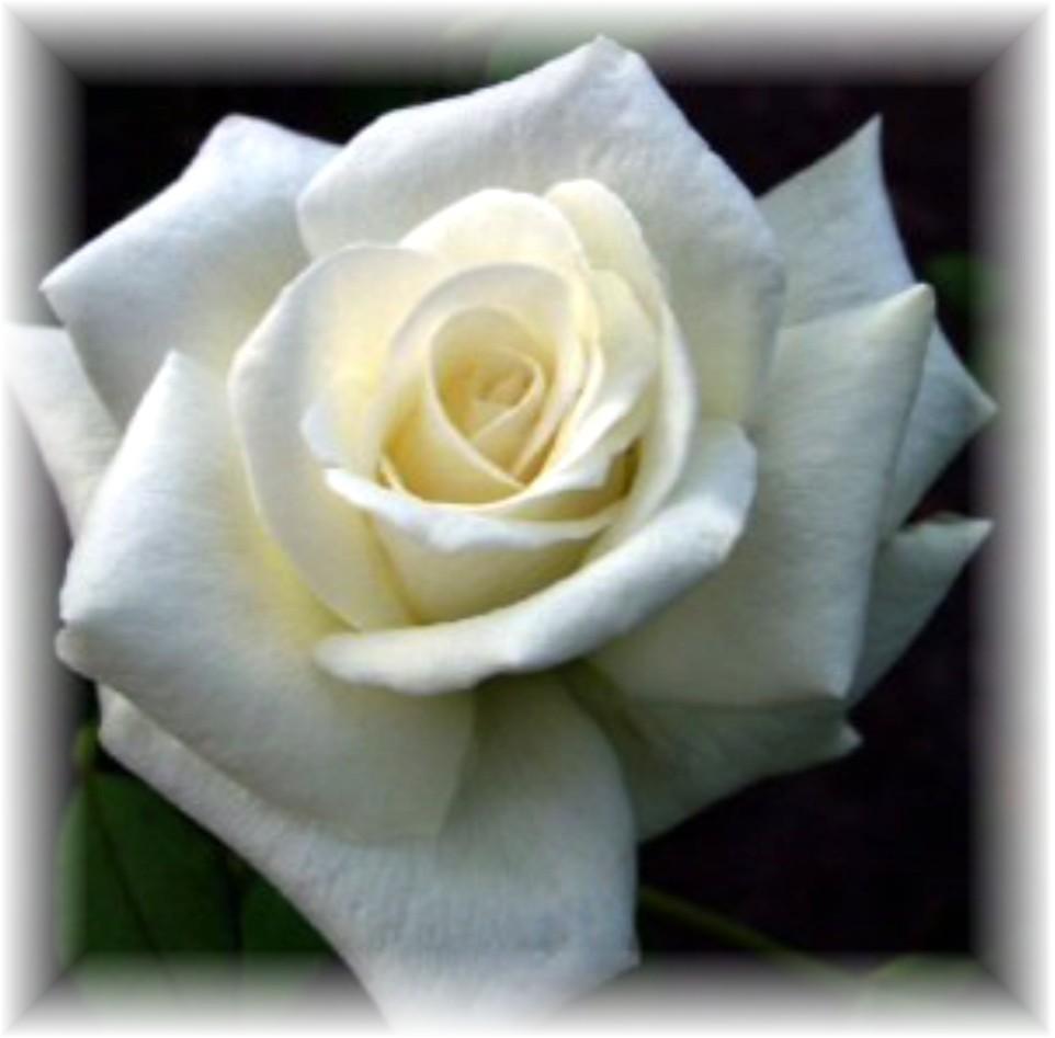 Rosa  Ellis