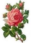 Rose Marie Serina